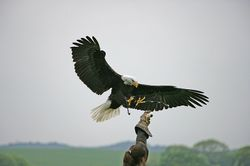 The Hawk Conservancy, Weyhill, Hampshire