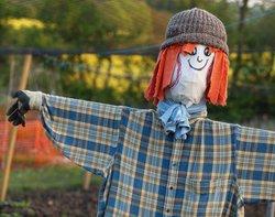 2010 model Scarecrow at Steeple Claydon allotments, Bucks