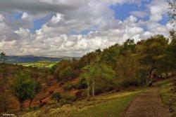 On the edge of Dartmoor