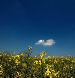 Summer sky at Leckhampstead, Bucks