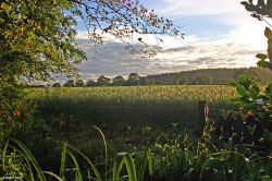 Stour Valley Summer