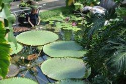 Kew Royal Botanical Gardens, Kew.