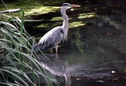 Ruislip duck pond