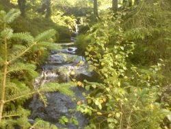 A gentle stream