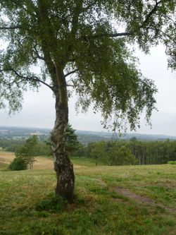 View over Ashdown Forest, Broadstone Walk