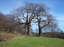 Trees in Margam Park near Port Talbot