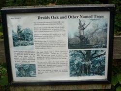 Druid's Oak description