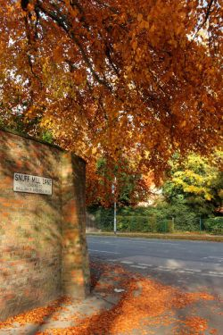 Snuff Mill Lane Cottingham Autumn