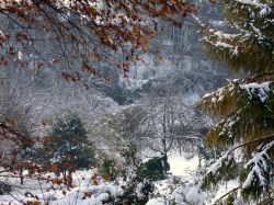 Valley Gardens in winter
