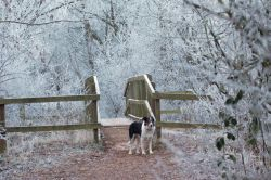 Hoar Frost at the Bridge