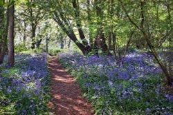 Piddles Wood, Sturminster Newton.