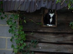 CAT UNDER A HOT TIN ROOF