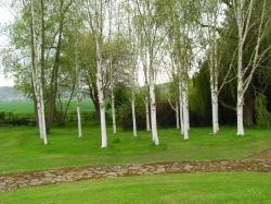 Trees at Brobury