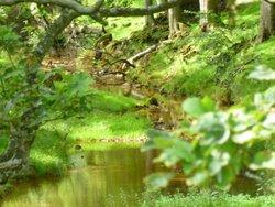 Wood and stream near Hawes.