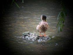 Quacker Tales