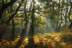 Autumn Light 1