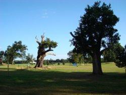 Hatfield Park