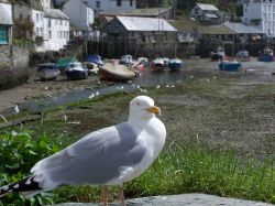The Polperro Pasty and Chip Pincher
