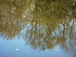 Reflections on Lound Pond