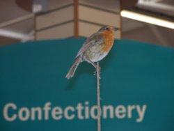 Robin on a stick