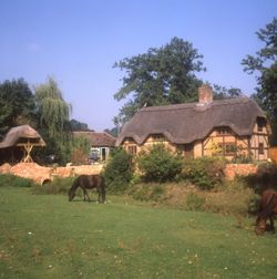 Pony and cottages at Minstead Green in the New Forest