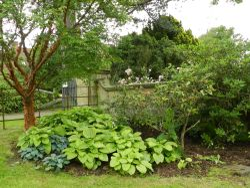 Borde Hill Garden 24 June 2011