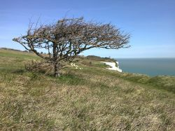 Between the Lighthouse and Dover