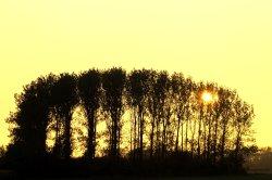 Setting sun, Bernwood area, Botolph Claydon, Buckinghamshire