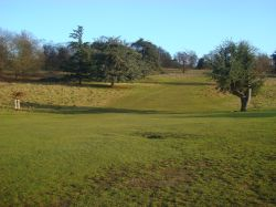 Richmond Park, sunny January day