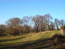 Richmond Park, sunny January day