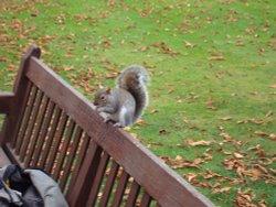 Squirrel in Kensington Gardens