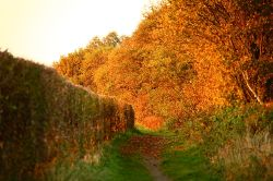 Autumn in Linear Park, Rainford