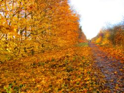 Autumn in Shipley Country Park