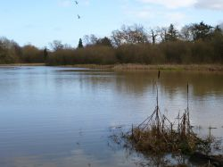 Bullrushes and Millpond