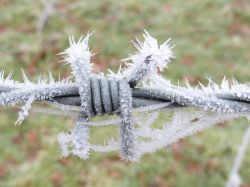 Now that Is a sharp frost!