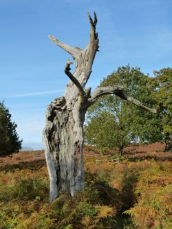 Dead and fallen trees in Bradgate Park