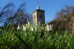 First Signs Of Spring At Whitburn