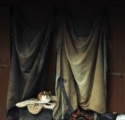 Avening farm cat