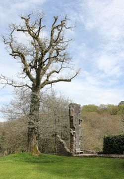 The Barbican - Okehampton Castle