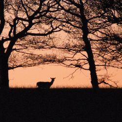 Deer at Wentworth Castle