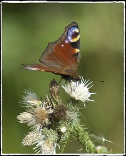 Lound Lakes Walks are a haven for butterflies.