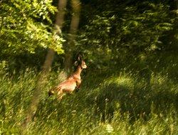 Deer near Grasmere