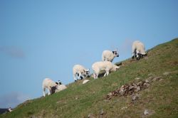 Lambing season in Weardale