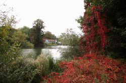 Thames Riverbank at View Island, Caversham Wallpaper