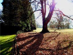 Autumn Sunset on the parkland at Nidd