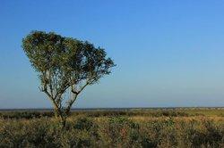 Lone tree in Cleethorpes