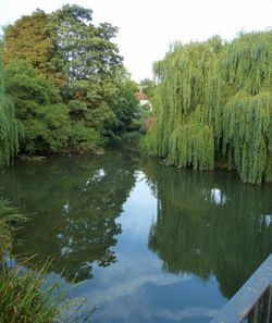 A Reflection About The River Mole