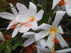 Flowers, Kew Gardens