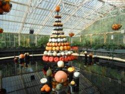 Pumpkin Display, Kew Gardens