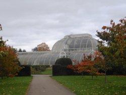 Palm House in Autumn, Kew Gardens